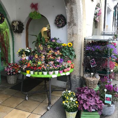 Blumenstube Perchtoldsdorf